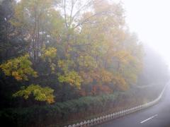朝靄風景-1
