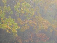 朝靄風景-2