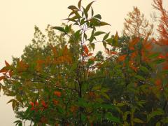 朝靄風景-6