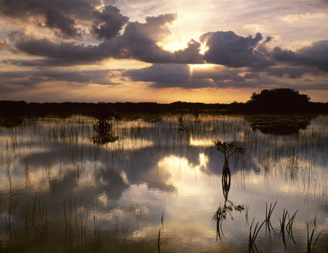 Everglads