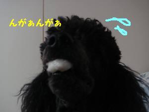 20081202 003