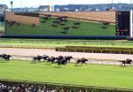 東京競馬場ターフビジョンと馬