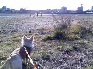 1月27日お散歩4