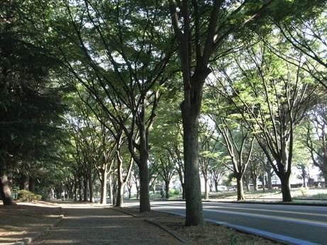 コピー ~ 8月15日駒沢公園