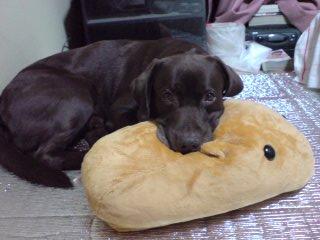 カピバラ枕