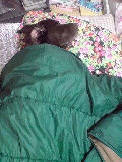 お布団で入眠