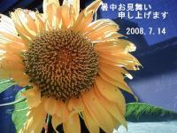 ひまわり_08