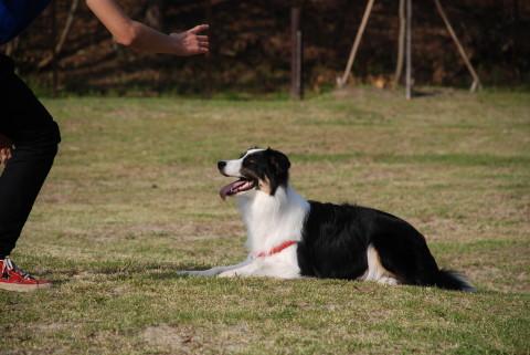 dogrun1