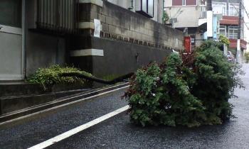 街路樹www