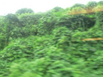 緑が広がる