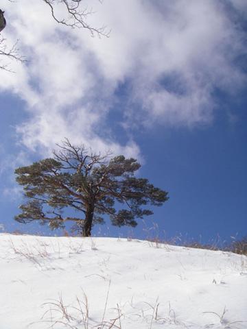 青空と雪…quickturnさん撮影