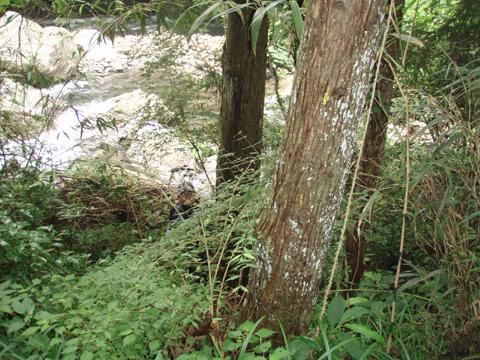 梅の木川スタート地点…
