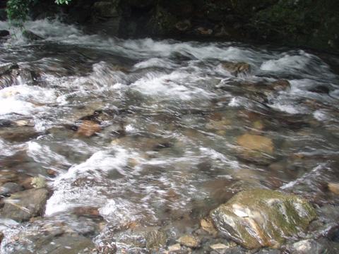 梅の木川の水