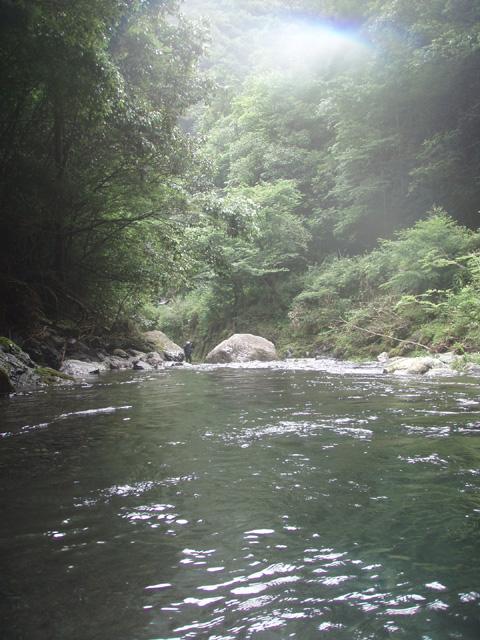 梅の木川の風景