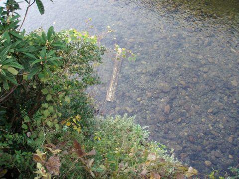 川底のガードレールが…