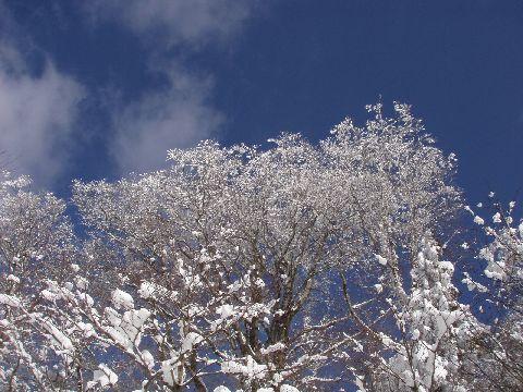 樹氷か? 霧氷か?