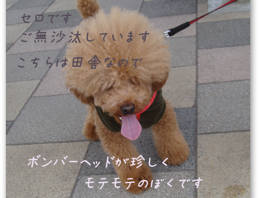 20090409-1.png