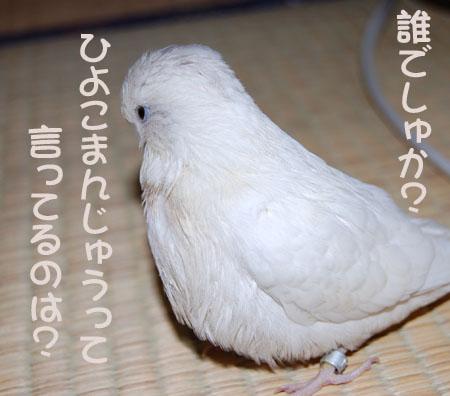 白いひよこまんじゅう