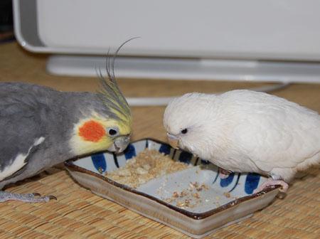 仲良く(?)食べてます