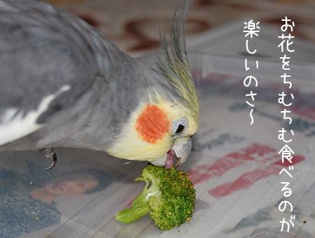 ブロッコリーをお食べになる