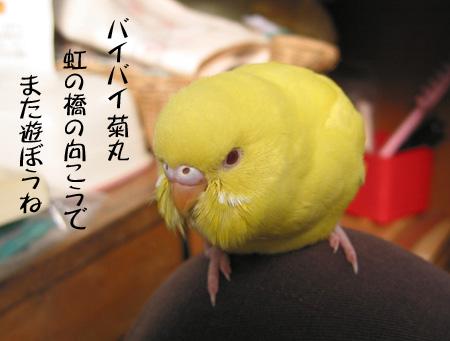 バイバイ菊丸