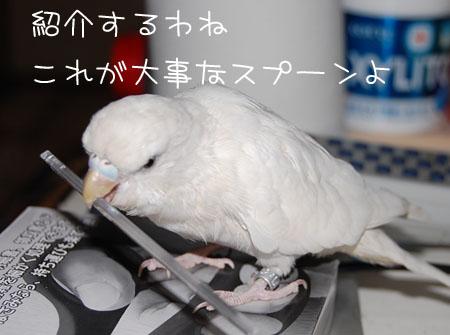 お気に入り紹介サクラ編