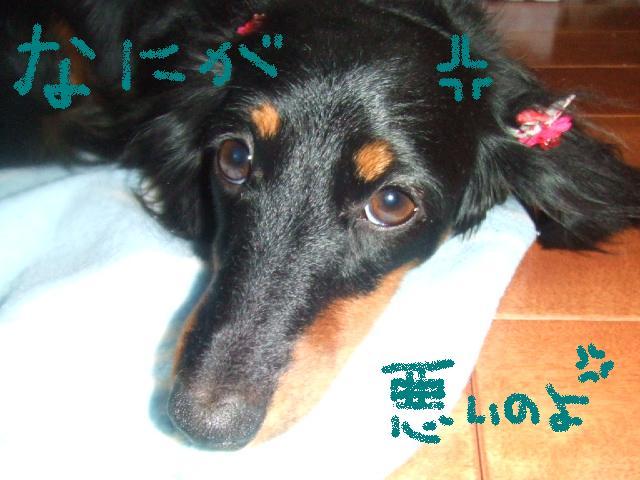2006_04020212.jpg
