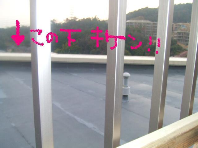 2006_04020216.jpg