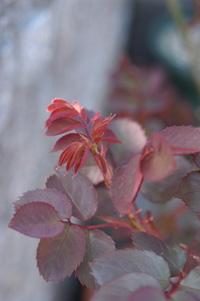 okurahoma325.jpg