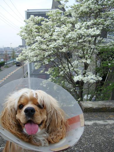 なんの花?