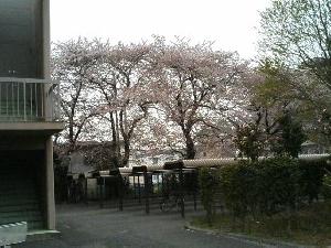 20060407-02.jpg