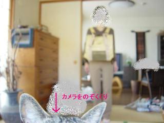 DSC06230ami.jpg