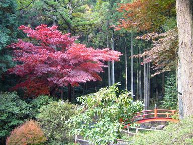 椎茸神社の紅葉②
