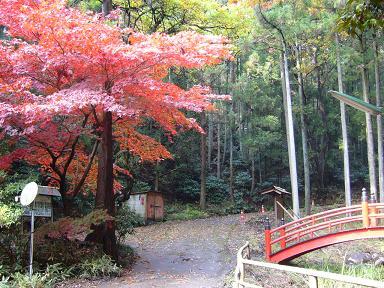 椎茸神社の紅葉