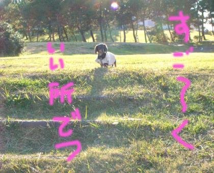 6_convert_20081201215227.jpg