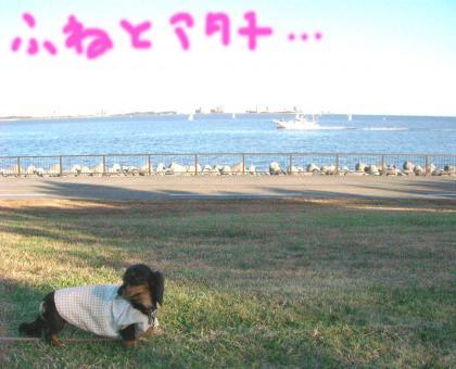 7_convert_20081201215249.jpg