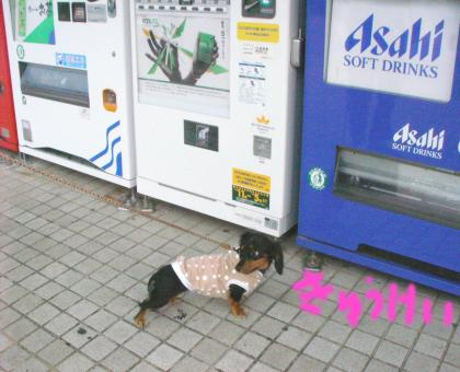 huttu2_convert_20081013135412.jpg