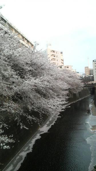 nakameguro3.jpg