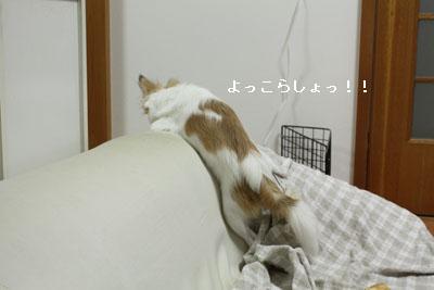 IMG_3128・2 コピー