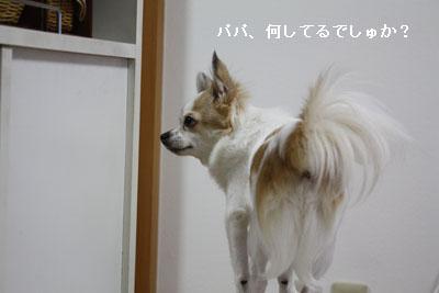 IMG_3130・2 コピー