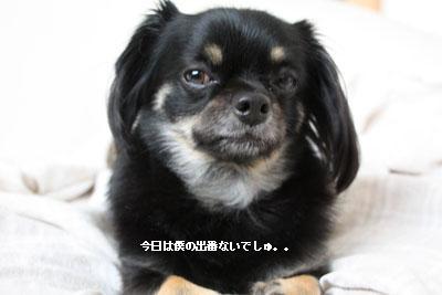 IMG_3392・2 コピー