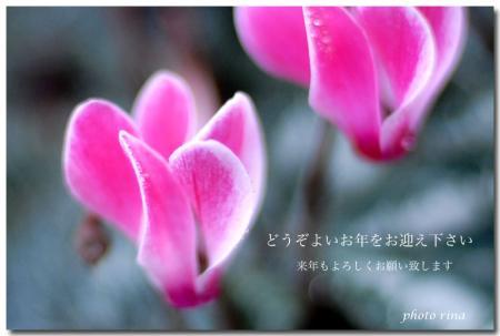 DSC_4249-1.jpg