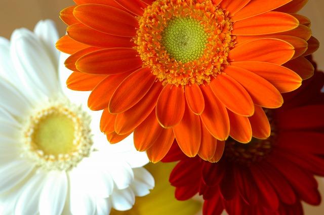 Flickrで外人さんからウケがいい。Like SUN!だそうです。結構うれしい。^^