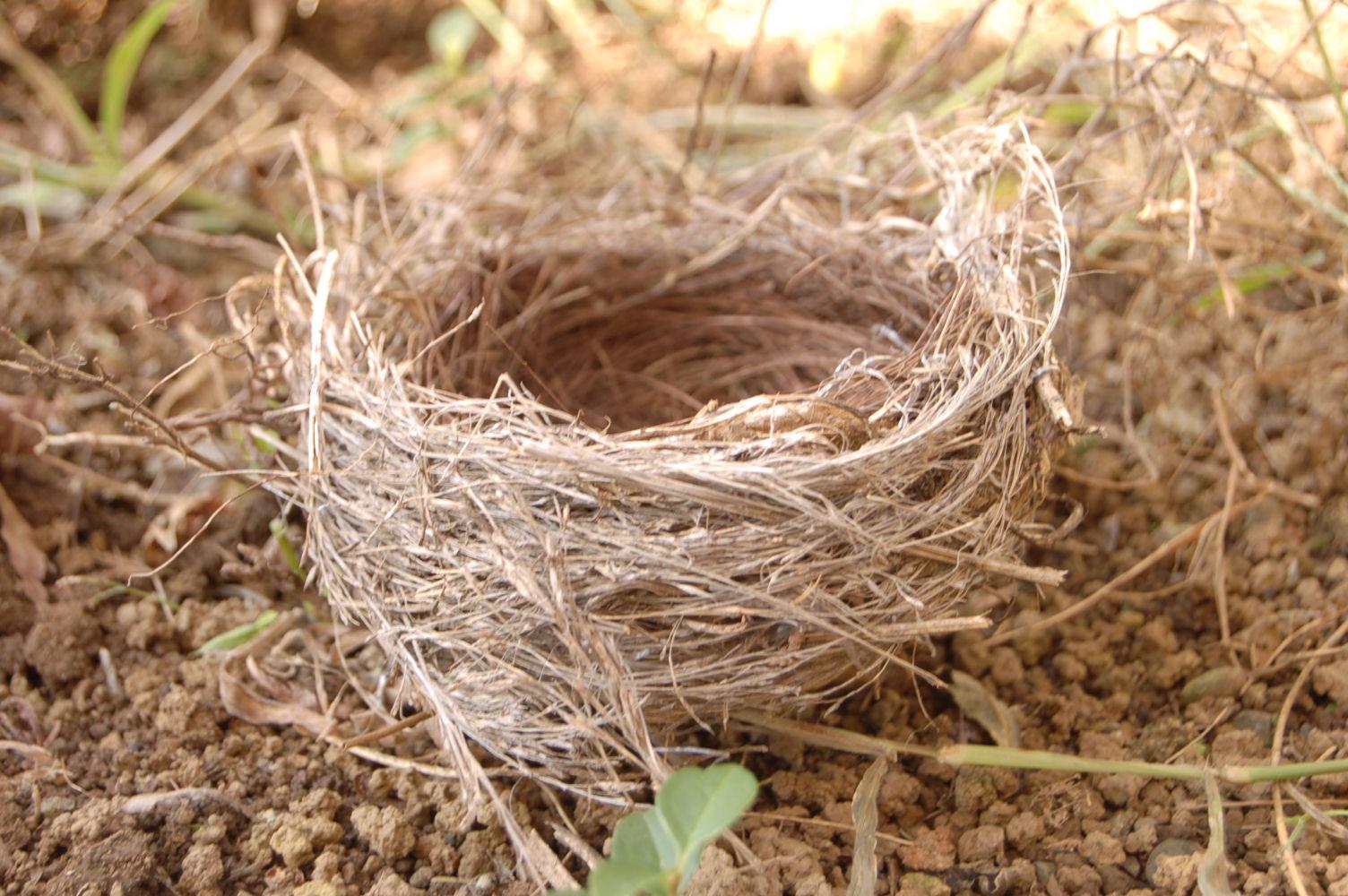 091021鳥の巣