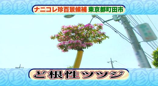 20090604-2.jpg
