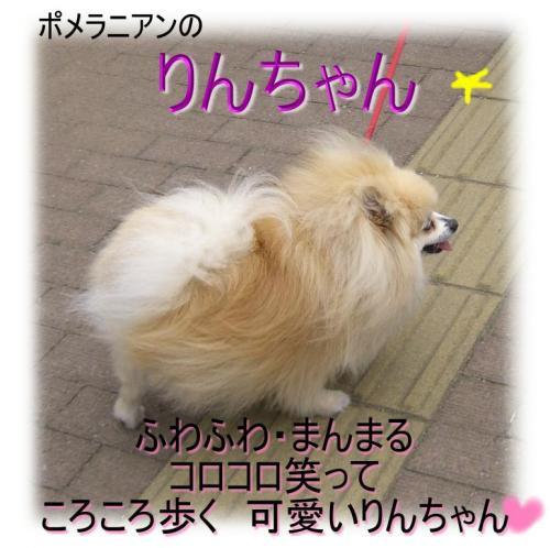 09042230_convert_20090424111950.jpg