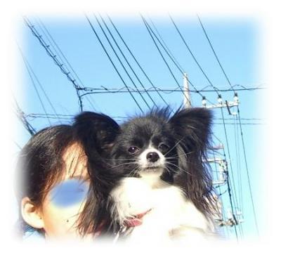 09042703_convert_20090427115706.jpg