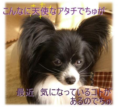 09050203_convert_20090502111808.jpg