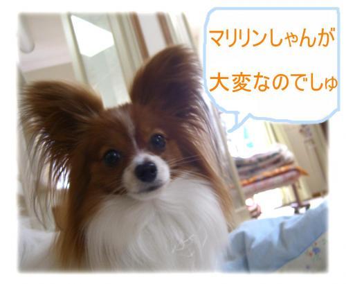09050601_convert_20090506171146.jpg