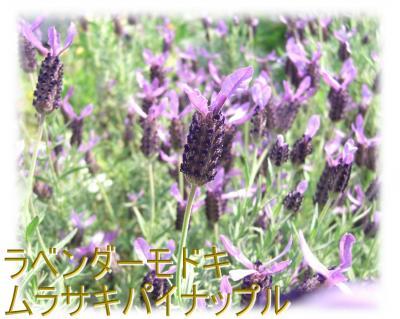 09050901_convert_20090509172247.jpg